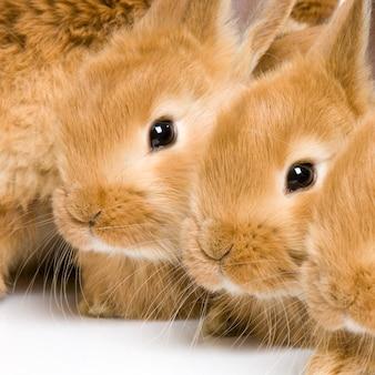 Close-up op een geïsoleerde groep konijntjes
