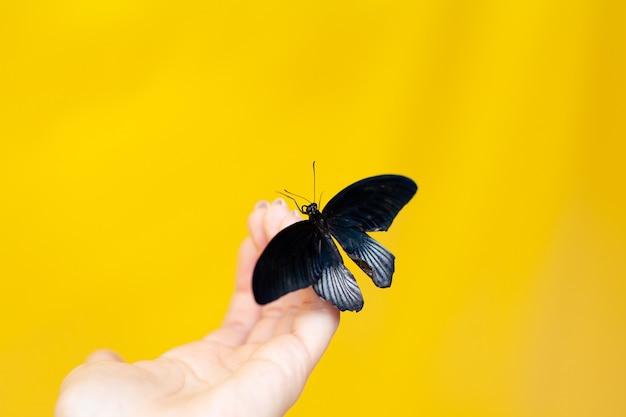 Close-up op een gekleurde gele achtergrond. vlindervangst op zijn hand. tropische vlinder. zomer. witte achtergrond, ruimte voor tekst. hoge kwaliteit foto