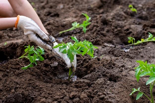 Close-up op handen kleine boom in de grond planten
