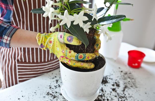 Close-up op het verplanten van een plant a in een nieuwe pot