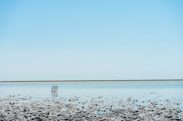 Close-up op interessant landschap met zoutmeer sivash en helende modder. een strand met een ongewone textuur voor de planeet aarde. ruimte landschap. reizen fotoconcept.