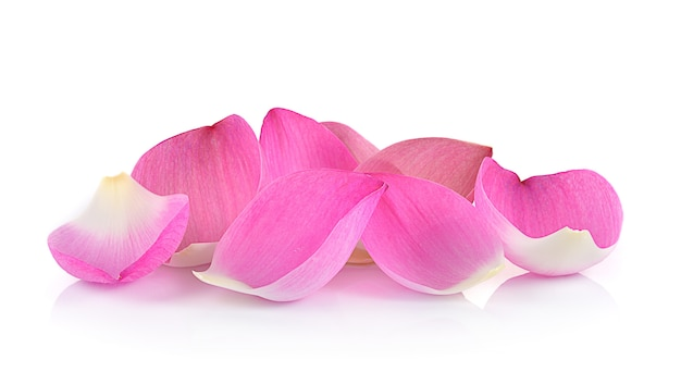 Close-up op lotus bloemblaadje op witte muur