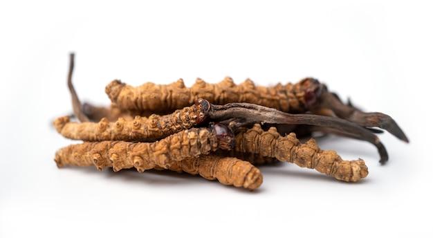 Close up ophiocordyceps sinensis of mushroom cordycep dit is een kruiden.