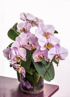 Close-up orchidee groeit in een pot