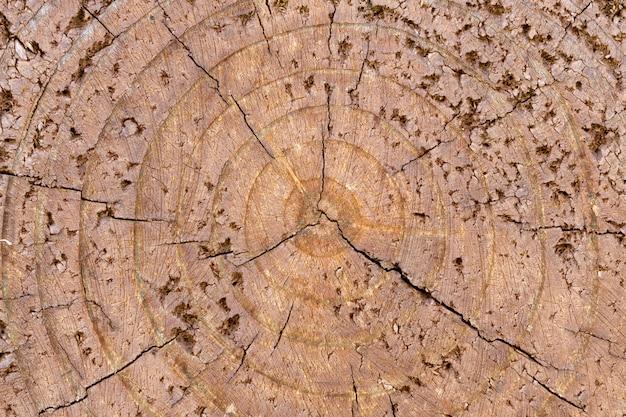 Close-up oude houten textuur van bruine gebarsten boomstronk. abstracte grungeachtergrond