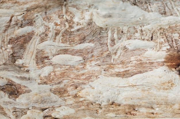 Close-up oude houten textuur