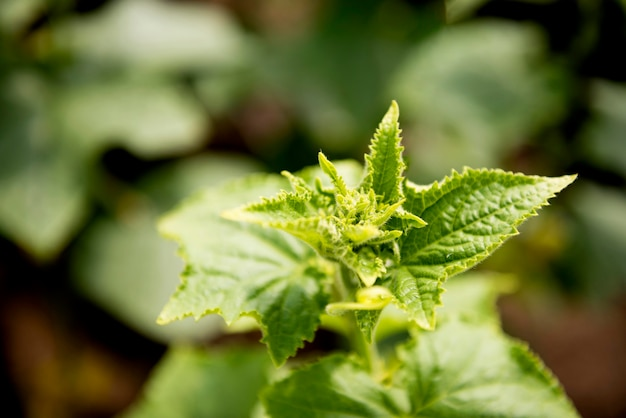 Close-up plant met onscherpe achtergrond