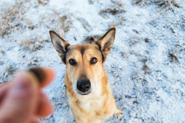 Close-up portret van bovenaf van gelukkige roodharige bastaard hond zitten en kijken naar camera