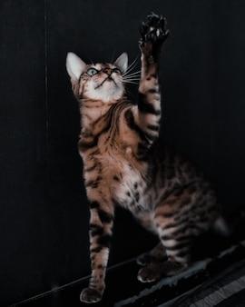 Close-up portret van een kat