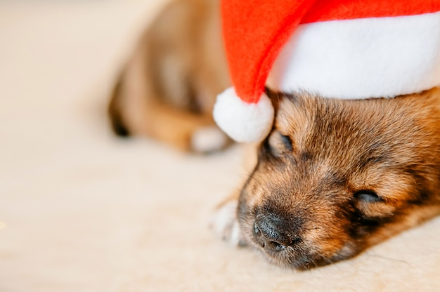 Close-up portret van een slapende puppy met een kerstmuts