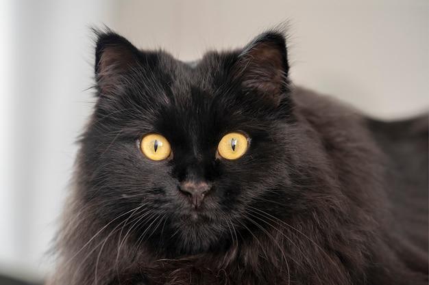 Close-up portret van een zwarte kat met gele ogen die thuis rusten.