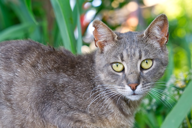 Close-up portret van grijze kat met groene ogen op groen gras achtergrond nonpedigree katten