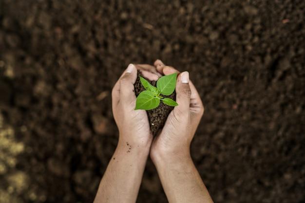 Close-up portret van hand met zaad in de tuin met bodem achtergrond