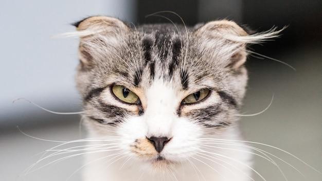 Close-up portret van kat die in de camera kijkt, sochi 2020