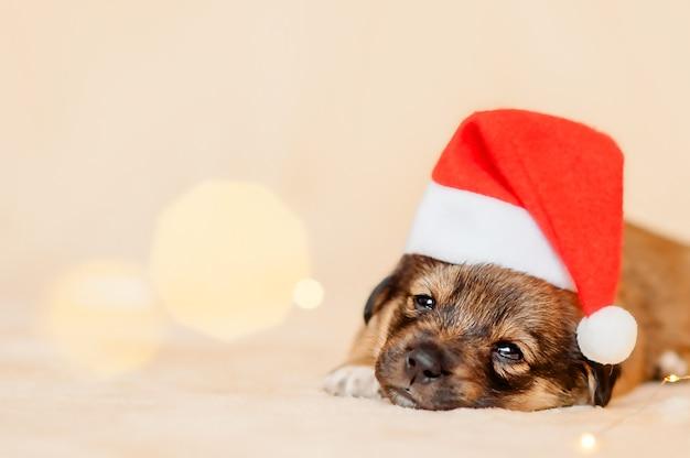Close-up portret van puppy met kerstman hoed op beige achtergrond met bokeh