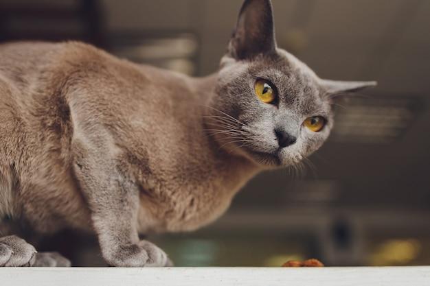 Close-up portret van schattige kleine zwarte kat met mooie ogen, dakloze kat, details van kattengezicht, dierenportret.