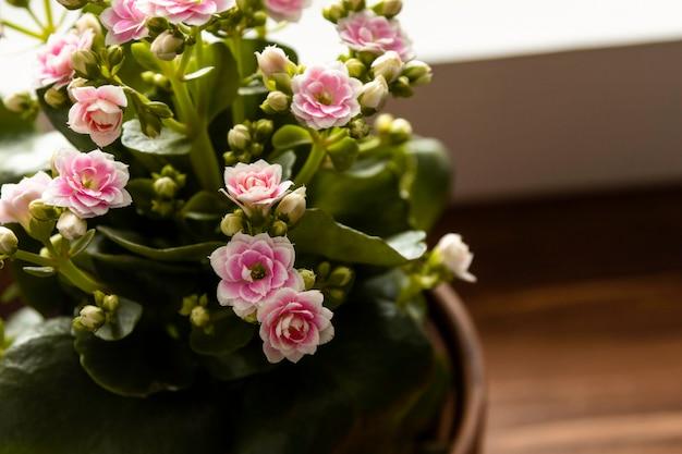 Close-up pot met bloem