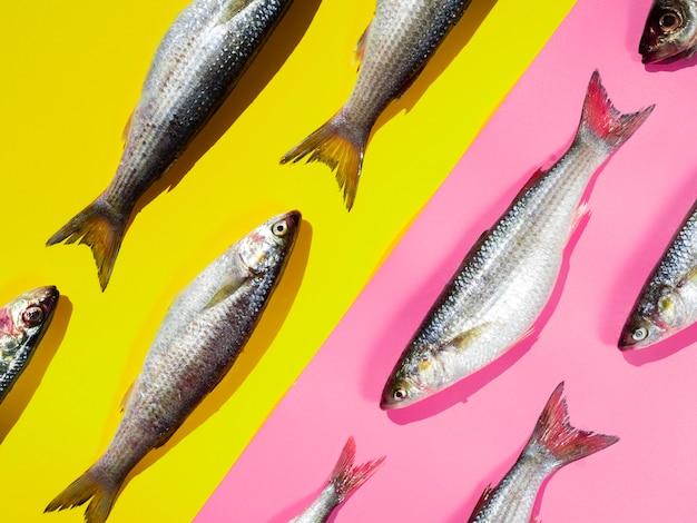 Close-up ruwe makrelen met kieuwen