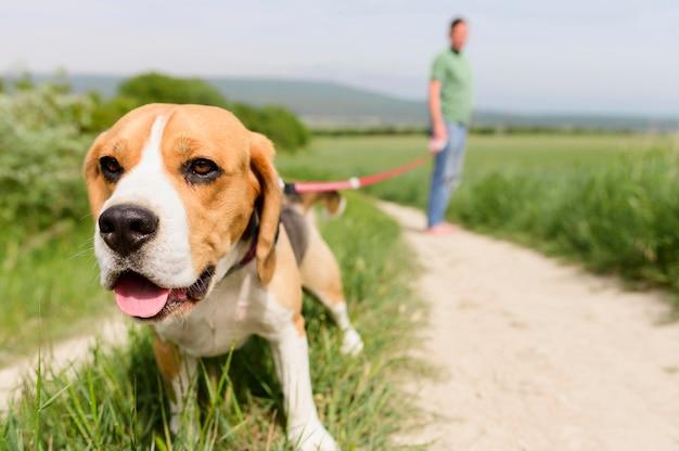Close-up schattige beagle genieten van wandelen in het park