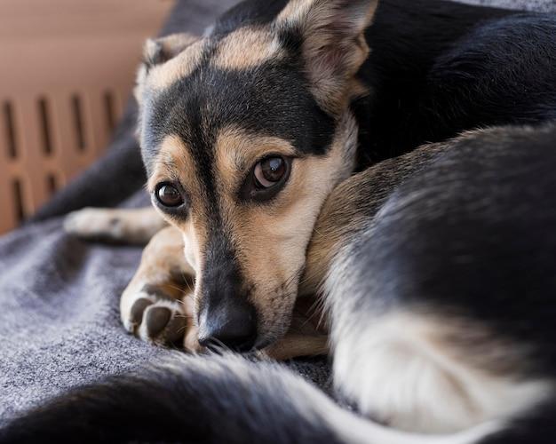 Close-up schattige hond deken opleggen