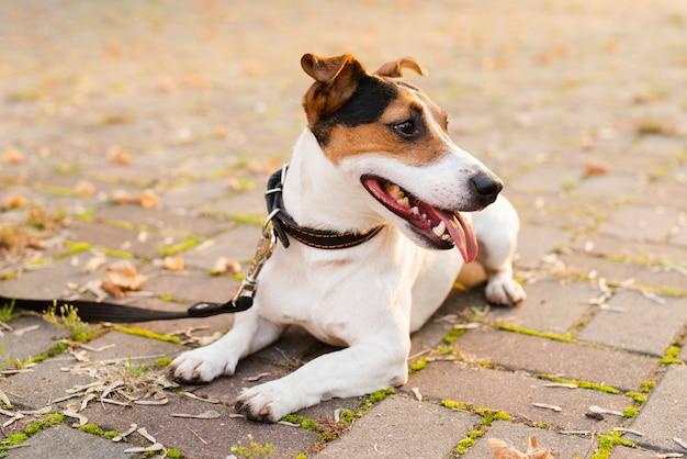 Close-up schattige kleine hond buitenshuis