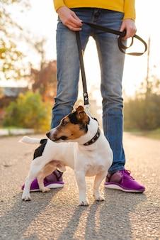 Close-up schattige kleine hond uit voor een wandeling