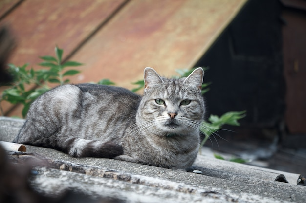 Close-up schattige korthaar gestreepte grijze kat met groene ogen op een grijze leien dak