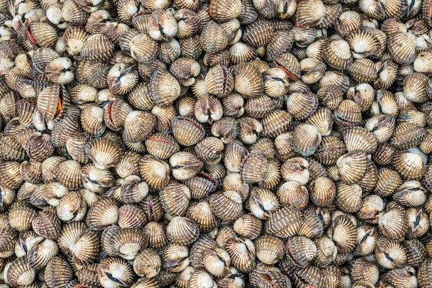 Close-up-schelpdieren achtergrond