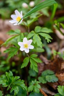 Close-up selectieve aandacht van een geweldige bloem onder zonlicht