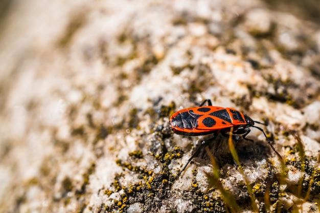 Close-up selectieve focus shot van een firebug op het stenen oppervlak - perfect voor achtergrond
