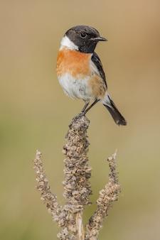 Close-up selectieve focus shot van een mooie oost-bluebird