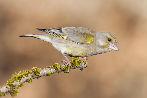 Close-up selectieve focus shot van een mooie vogel