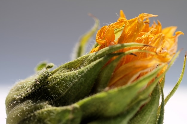 Close-up selectieve focus shot van een oranje bloem met groen op een grijze achtergrond