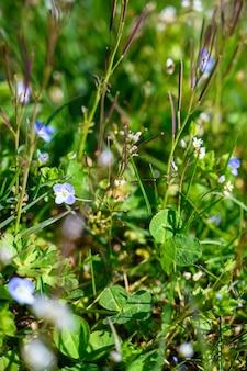 Close-up selectieve focus shot van geweldige bloemen in zonlicht