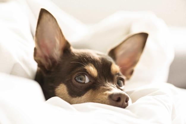 Close-up selectieve opname van een hond