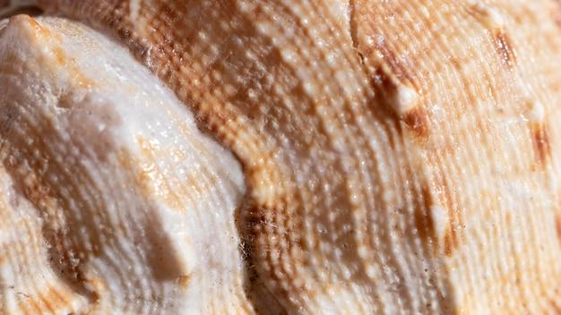 Close-up shell organische achtergrond