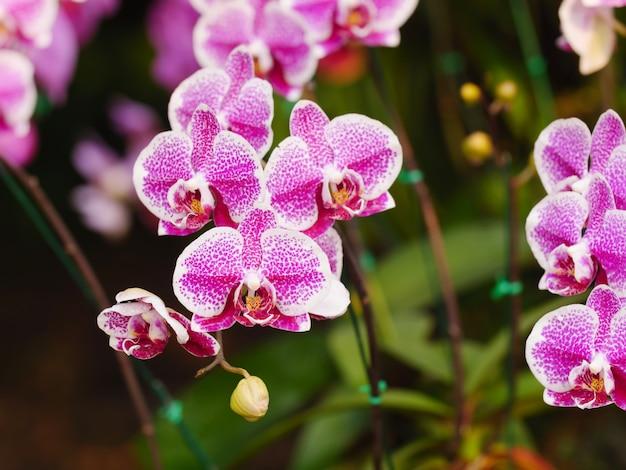 Close-up shot boeket van een frisse en natuurlijke kleurrijke tropische orchidee select focus ondiepe scherptediepte