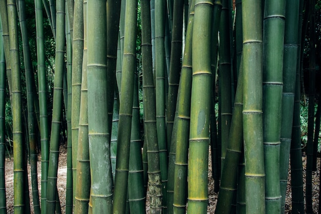 Close-up shot van bamboebomen