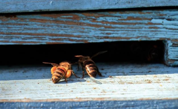 Close-up shot van bijen op een houten oppervlak overdag