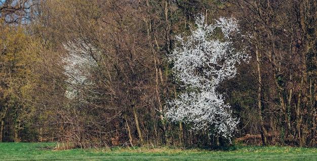 Close-up shot van bomen en groen in maksimir park in zagreb kroatië tijdens de lente