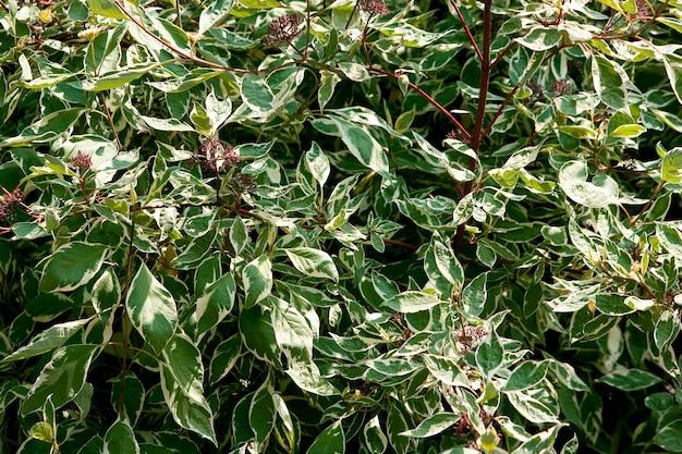 Close-up shot van de bladeren op de takken van een plant