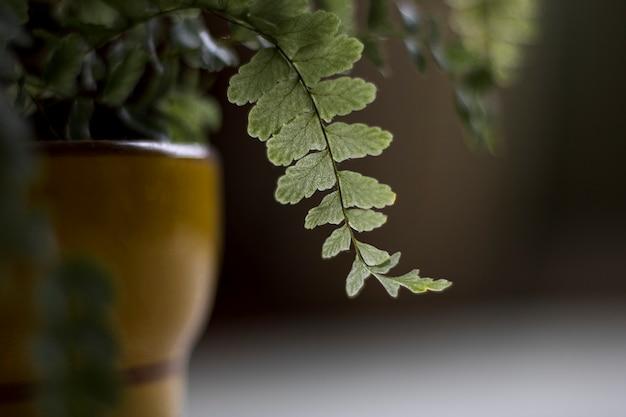 Close-up shot van de bladeren van een plant in een kom