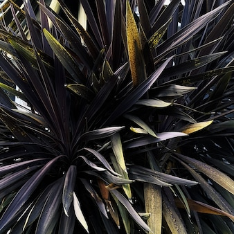 Close-up shot van de bladeren van verschillende planten die naast elkaar groeien