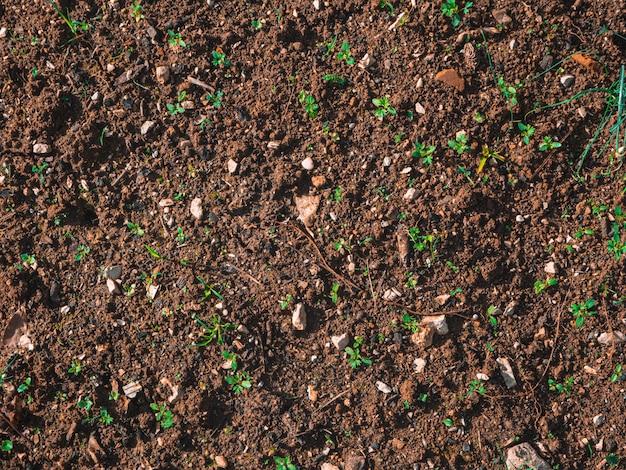 Close-up shot van de bodem op de grond met kleine groene spruiten op een zonnige dag