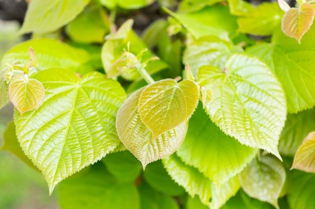 Close-up shot van de groene bladeren van een boom in de tuin die schijnt onder de stralen van de zon