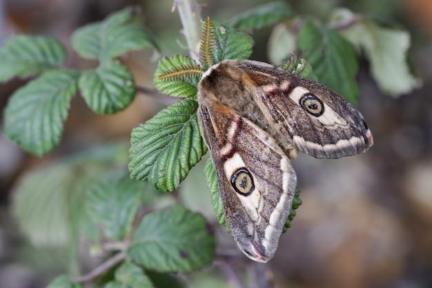 Close-up shot van de motten met prachtige patronen op zijn vleugels op de groene plant