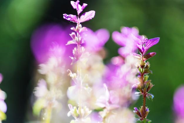 Close-up shot van de prachtige bloemen. geschikt voor bloemenachtergrond.