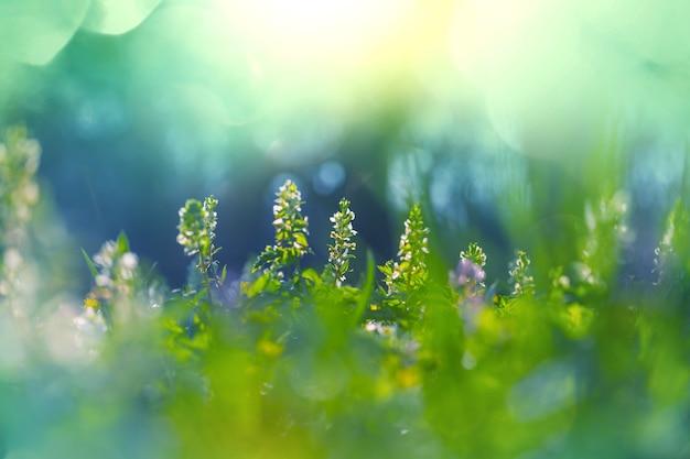 Close-up shot van de prachtige bloemen.