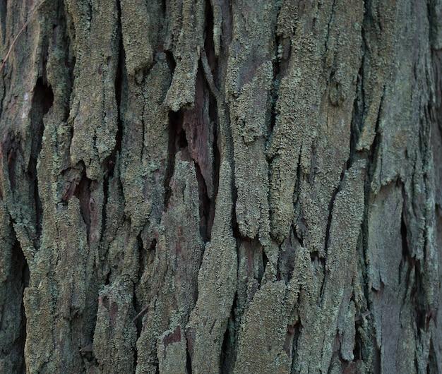 Close-up shot van de stam van een oude boom