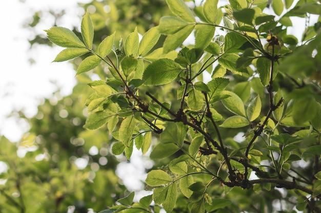 Close-up shot van de takken van een boom met groene bladeren in de tuin